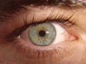 Braune Augen vertrauenswürdiger als blaue?