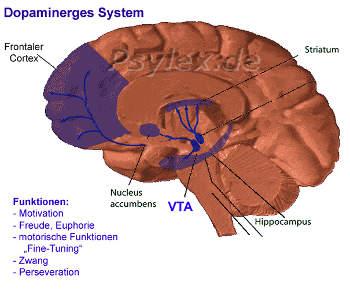 Dopaminerges System an Sucht beteiligt