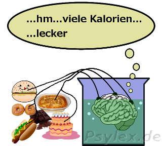 Gehirn, Nahrung, Essverhalten