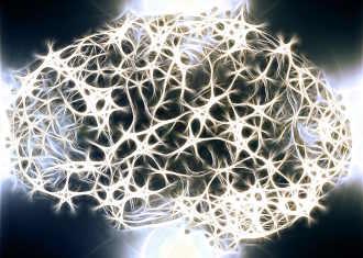 gehirn-neurone