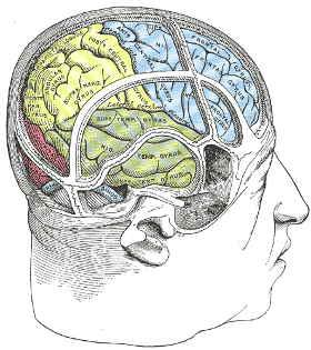 gehirn-rechte-hemisphaere