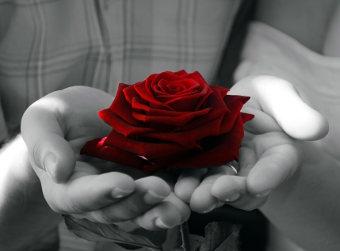 geschenk-rose