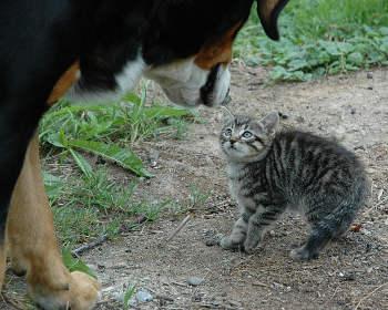 Hunde- oder Katzenfreund