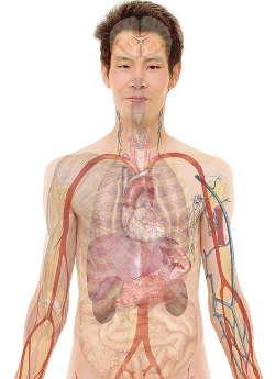 Psyche Körper - Psychosomatik