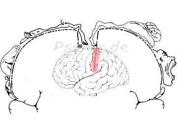 somatosensorisch-motorischer Cortex