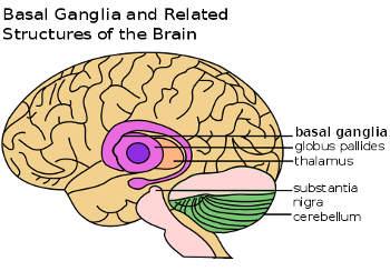 Gehirnstrukturen, die beim Tourette-Syndrom involviert sind