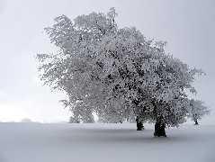 winter windbuchen